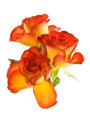 Beautyful roses