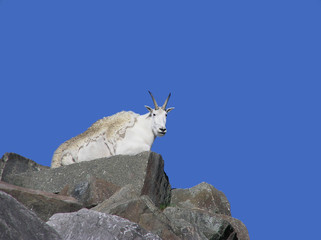 Mountain goat on top of rocky mountain