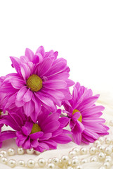 Pink Daisies on White Background
