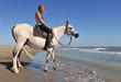 cheval arabe en bord de mer