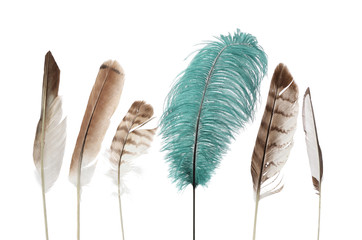 unique feather