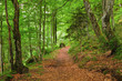 Green mountain forest in Pyrenees, France