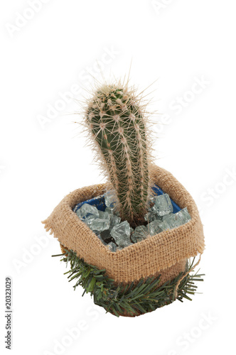cactus in decorated pot isolated on white