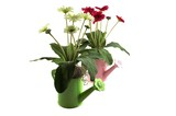 decorative watering cans with flowers