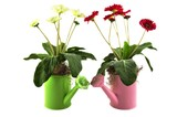 two watering cans with flower