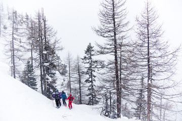 freeride skiers in a forest, overcast day
