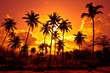 Leinwanddruck Bild - Coconut palms on sand beach in tropic on sunset