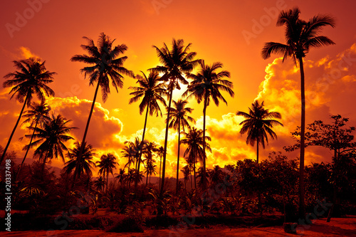 Leinwanddruck Bild Coconut palms on sand beach in tropic on sunset