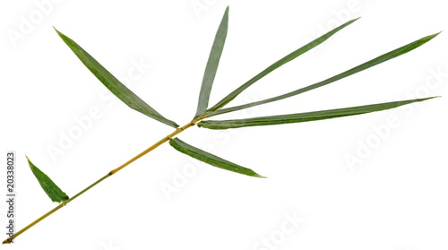 feuilles s ches bambou fond blanc photo libre de droits. Black Bedroom Furniture Sets. Home Design Ideas