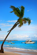 Palmtree and exotic Beach in Dominican Republic, punta cana