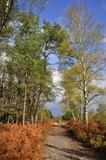 Forêt de Sillé dans la Sarthe en France en automne poster