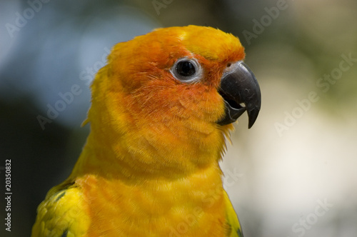 Close up of the head of a yellow parrot