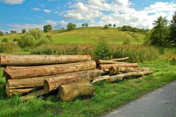 Baumstämme, Holzwirtschaft, Natur