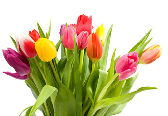 Bouquet of Dutch tulips over white background
