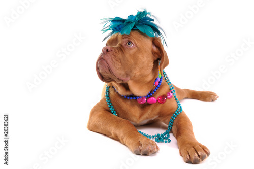 Poster Rich Puppy