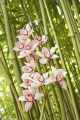 Orchids and Bamboo Stalks