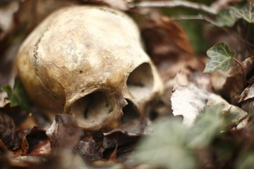 skull laying in the brush in a forest