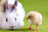 Bunny Rabbit and Chick