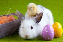 Laska i króliczek
