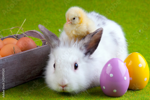 Chick and Bunny - 20419261