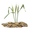 Wheat growing from pile of coins