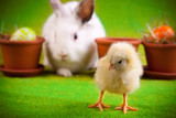 Easter Chick and Bunny
