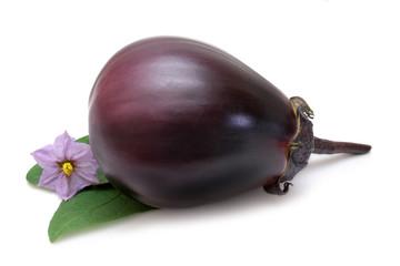 Purple Eggplant
