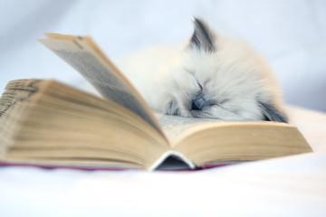 education of cat