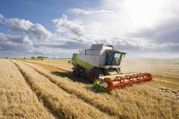 Tractor harvesting barley