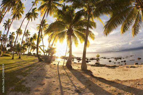 drzewka-palmowe-przy-wschodem-slonca-fidzi
