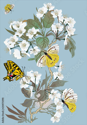 Plakat herry tree flowers and yellow butterflies