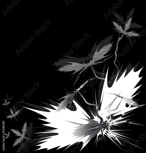 black and grey backgrounds. Sharp lack and grey flowers