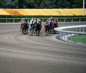 Thoroughbreds Racing Through the Final Turn