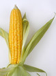 The golden corn on white background