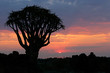 Desert sunset with a quiver tree, Namibia, southern Africa
