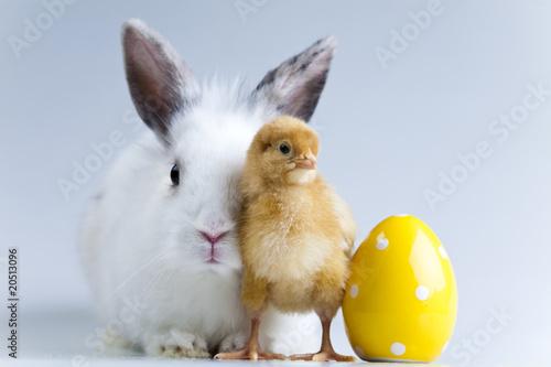 Staande foto Kip Happy Easter animal