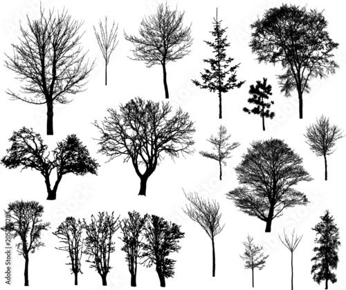 Beautiful winter tree silhouettes, highly detailed. - 20529028