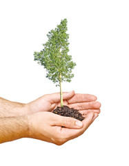 A tree in hands as a symbol of nature protection