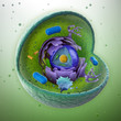 Animal cell cut-away - scientifically correct 3d illustration