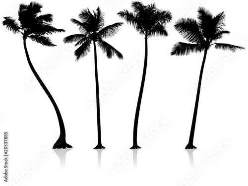 palm trees background. Zoom Not Available: Vector images scale to any size. palm trees background