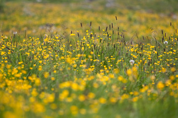 Yellow spring meadow