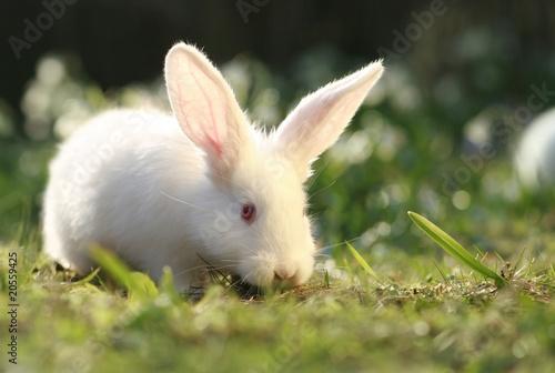 distrustful rabbit