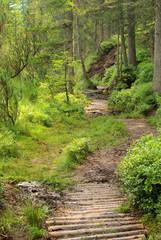 Piller Moor - Piller Swamp 10