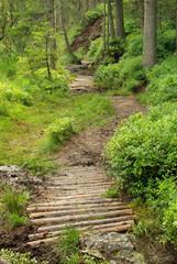 Piller Moor - Piller Swamp 11