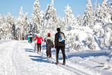 Fototapety Ski Langlauf  4594