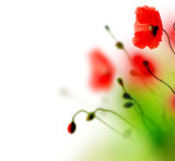 Fototapety Beautiful watercolor Poppy border
