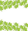 Vector - Green flowers on white background