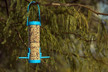 Birdfeeder on a mesquite tree