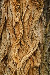 alberi 447
