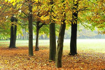 alberi 506